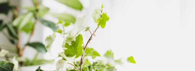 植物由来成分を配合した高機能性美容液